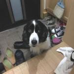 玄関に逃げたイヌ