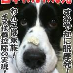 日本わんわん党 ◆脱原発◆